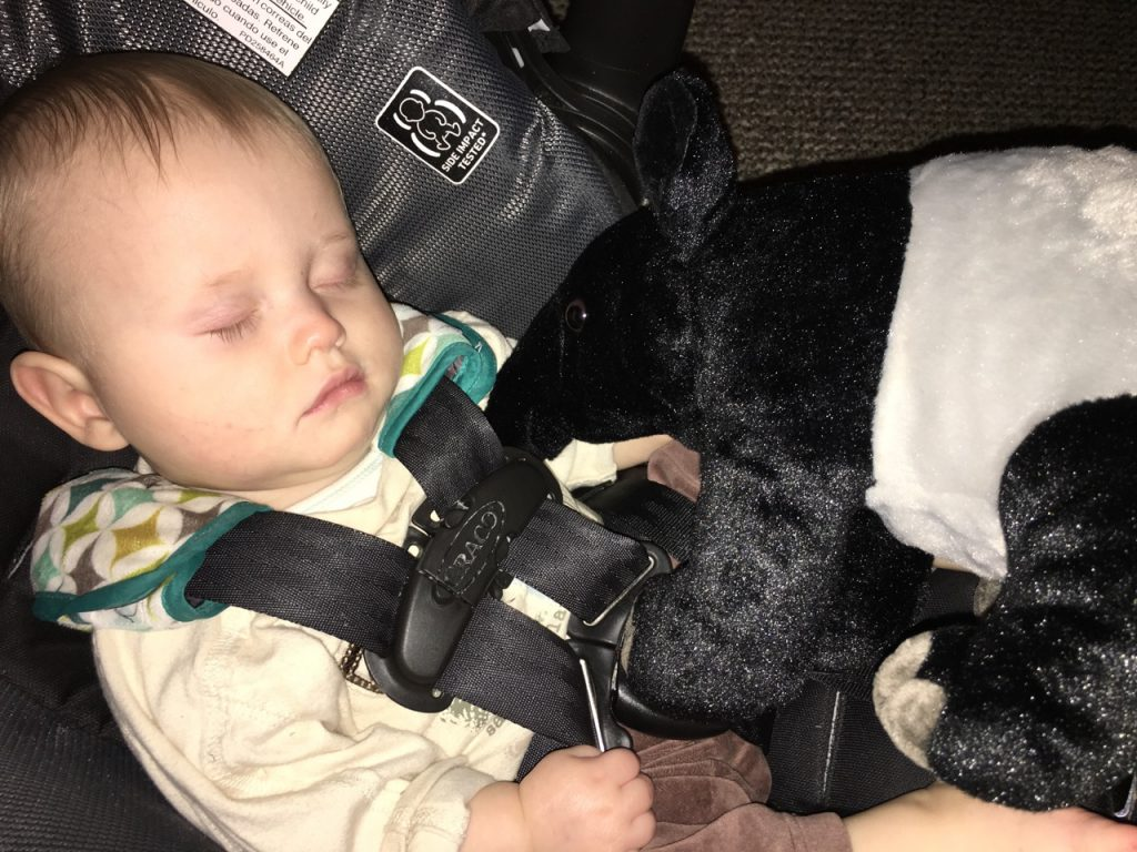"After a long day at the zoo, Jeremiah slept with his new friend ""Tapir"""